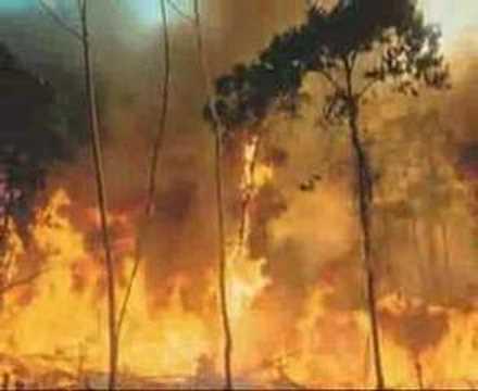Xote Ecológico - Luiz Gonzaga - Vander video