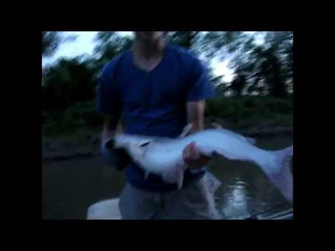 Missouri River and Tributary Fishing- Sturgeon and Blue Catfish
