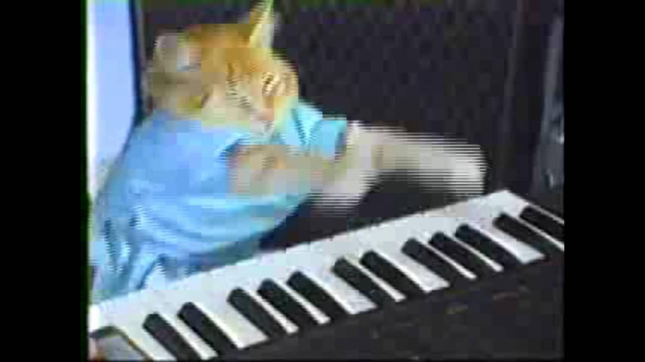 Youtube Cat Playing Piano