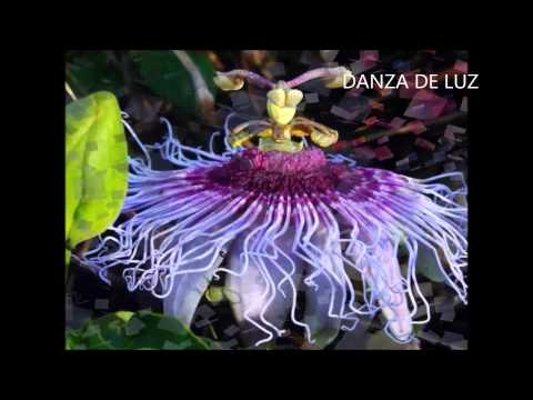 Sonidos flores naturales - Sounds natural flowers - Звучит живые цветы