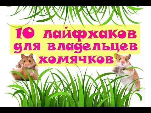 10 лайфхаков для владельцев хомячков ❤ #лайфхаки