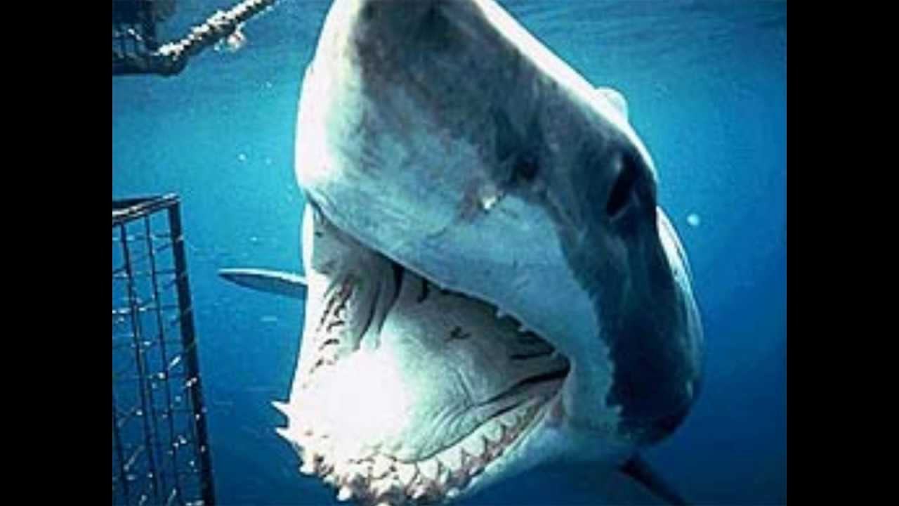 A Man Eaten By A Megalodon The Reef Them Song Youtube