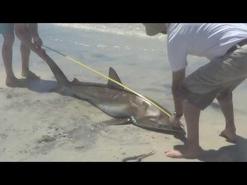 Beach Shark Fishing Australia
