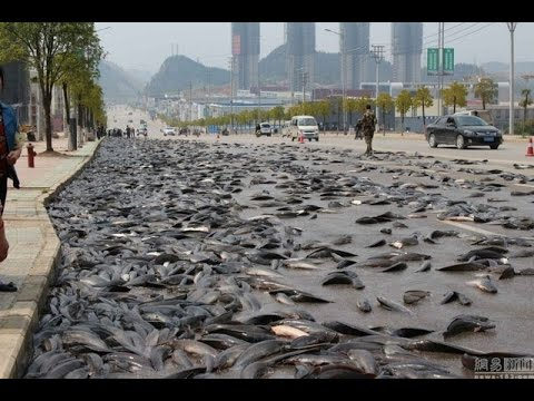 At Thailand 6,800 kilos of fish spilled onto Guizhou road 'rescued' with hoses and reloaded on truck
