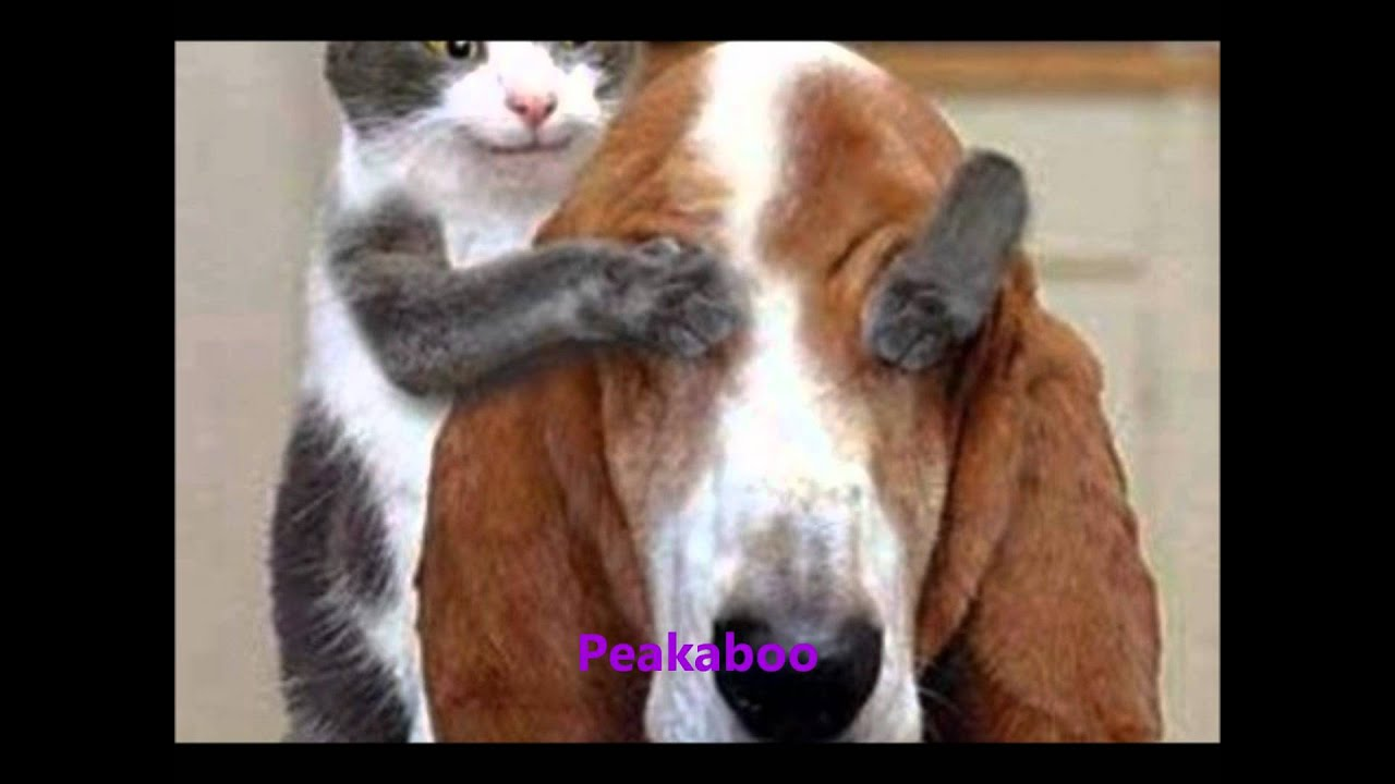 Cat At Dog Show