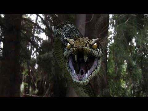 Титана Буа самая большая змея в истории планеты.Интересное видео на 100%