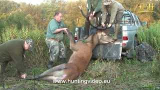 Red Stag Hunting In Hungary Bak (HD).mpg