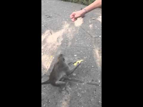 Chloe Bello y un viaje de terror en Bali: Se descompensó por falta de oxígeno y… ¡la atacó un mono!