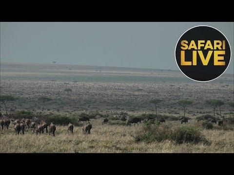 safariLIVE - Sunrise Safari - August 28, 2018