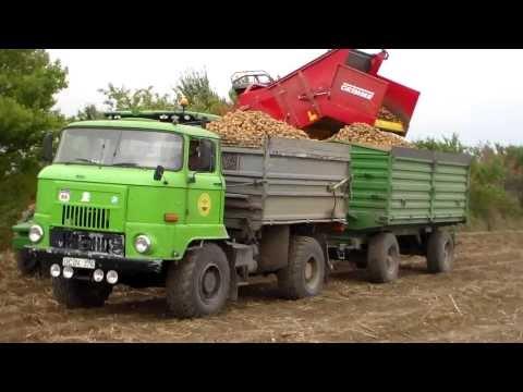 IFA L 60 in der Kartoffelernte 2013 in Großalsleben