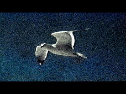 David Gray - Gulls (Official Video)