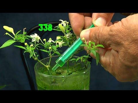 Mimose wächst, ein Pflanzentisch, Minichili und andere Updates