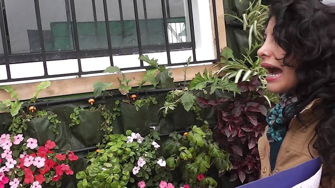 Plantas para jardin vertical exterior youtube for Plantas coloridas para jardin