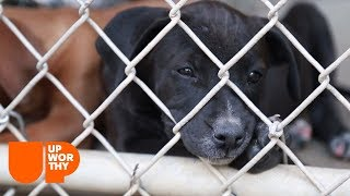 See how a dog rescue group chooses the dogs it saves.   A Rescue Dog