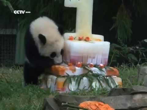 20,000 visitors attend birthday celebration of panda cub in Washington