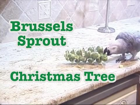 Einstein's Brussels Sprout Stalk Christmas Tree 2011