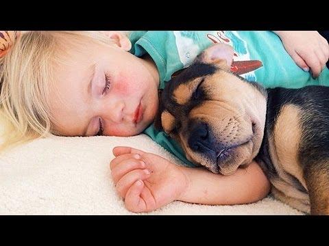 Cutest Puppy And Baby On The Internet