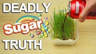 Sugar Truth: What it really does to your body