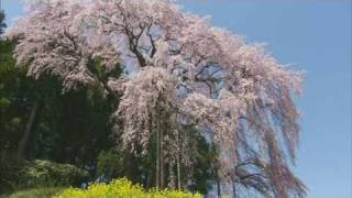 華爛漫 歴史浪漫 にほんまつ(オープニング)