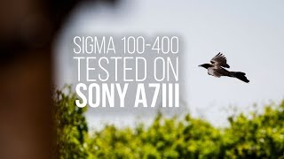 A Cheap Telephoto Zoom Lens for Sony a7III? |  Sigma 100-400mm