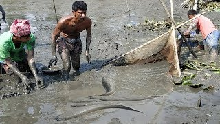 People lot of Fish Catching in Mud Water By Hand || Asia Fishing Video (Part-27)