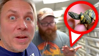 BABY SNAKE BORN AND ALL ESCAPED!! OH NO!! | BRIAN BARCZYK