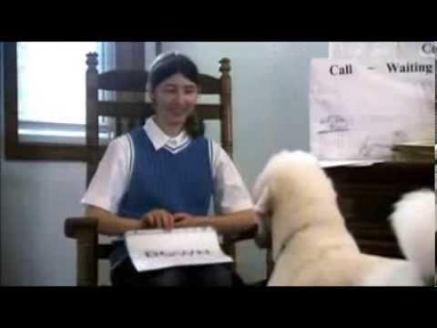 101 kutya - Az uszkár