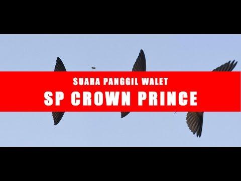 WALET SUPER | SUARA WALET CEPAT MENGINAP - SP CROWN PRINCE - FULL HQ AUDIO