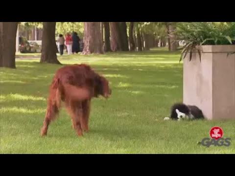 Broma con perro títere