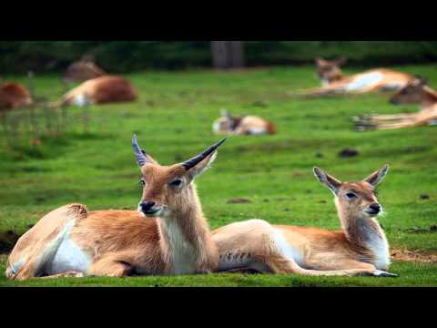 Knowsley Safari Park Rainhill North West England