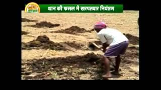 धान के खेती की वैज्ञानिक तकनीक