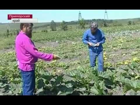 Правильные мигранты в России