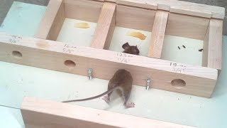 How small a hole can a mouse get through?  Experiments. by : Matthias Wandel