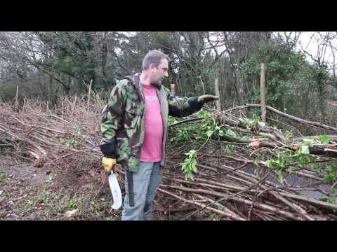 How to ...Traditional Hedge Laying in the South of England Style