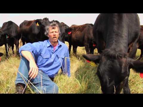 The World's Best Beef? Sweet Grass Farm - Wagyu Kobe Cows