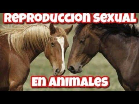 Reproducción en animales | Caballos