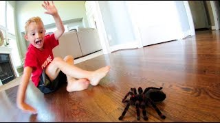 Dad Scares Son WITH A SPIDER!
