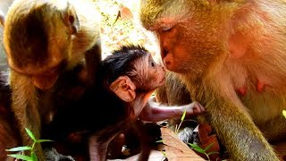 Bronx Jealous Brianna Kisses David Cute Baby monkey! How Bronx Doing?