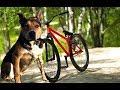 Упряжка с собакой на велосипеде Riding With A Dog On A Bike mp3