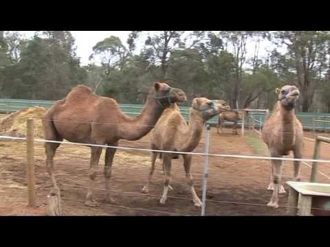 Barnaamijka Hereri & Perth Australia Geela 31 07 16