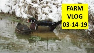 Farm Vlog Kapper Outdoors country living 03-14-19