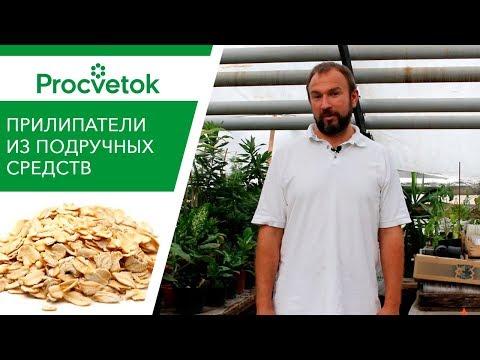 ТОП-8 народных ПРИЛИПАТЕЛЕЙ для внекорневой обработки растений. Обзор.