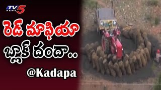 TV5 Ground Report On Red Sandalwood Smuggling in Kadapa