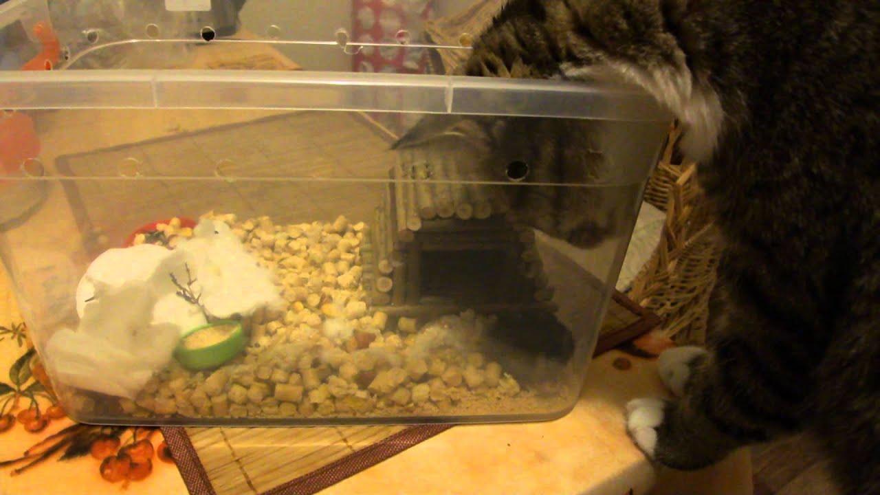 Хомяка в домашних условиях купание хомяка
