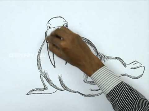 how to draw a walrus step by step easy