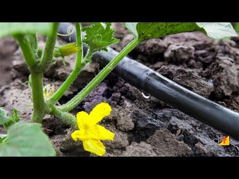 Clique e veja o vídeo Características do Sistema de Irrigação - Curso Projeto de Irrigação Localizada