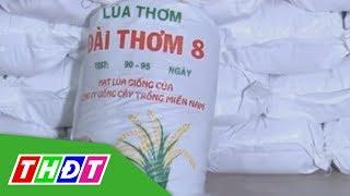 Đồng Tháp: Phát hiện cơ sở giả mạo lúa giống số lượng lớn | THDT