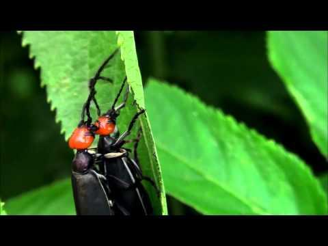 蟲相逢宣導短片(30秒版)