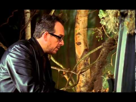 Elvis Costello - Fallen