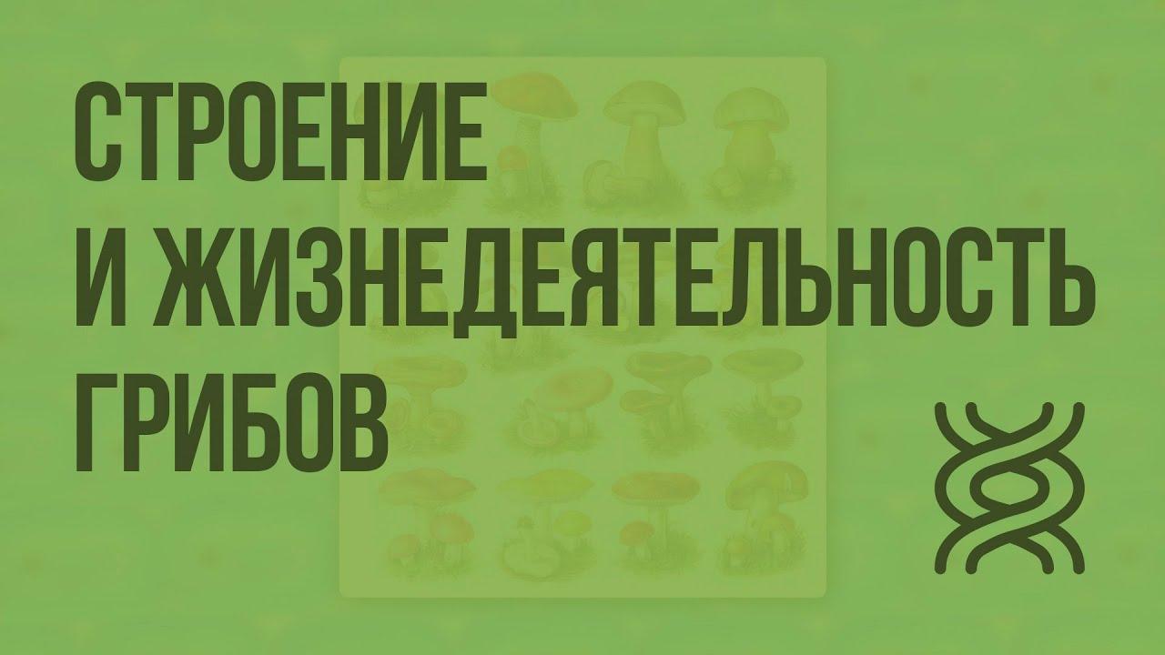Строение и жизнедеятельность грибов. Видеоурок по биологии 5 класс